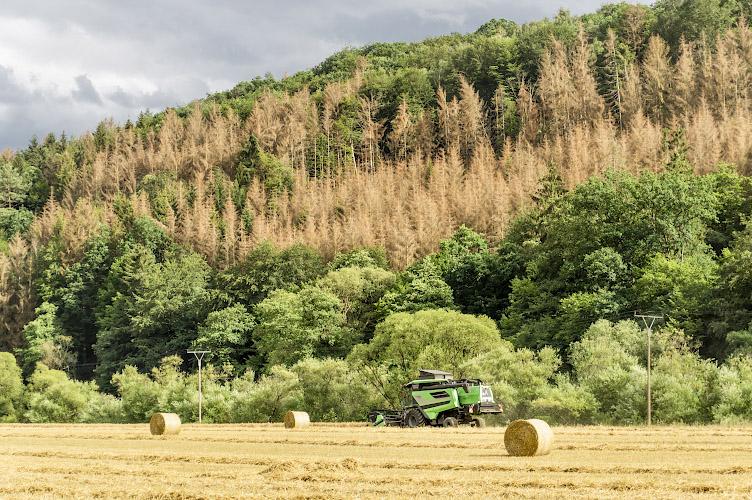 Waldsterben im Westerwald 2020
